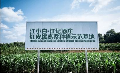 首席增长官:为何江小白的品牌营销会被全球潮流艺术家欣赏