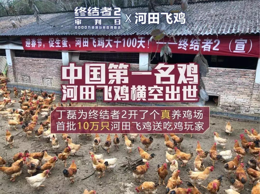 这次,丁磊终于不养猪了……养鸡!