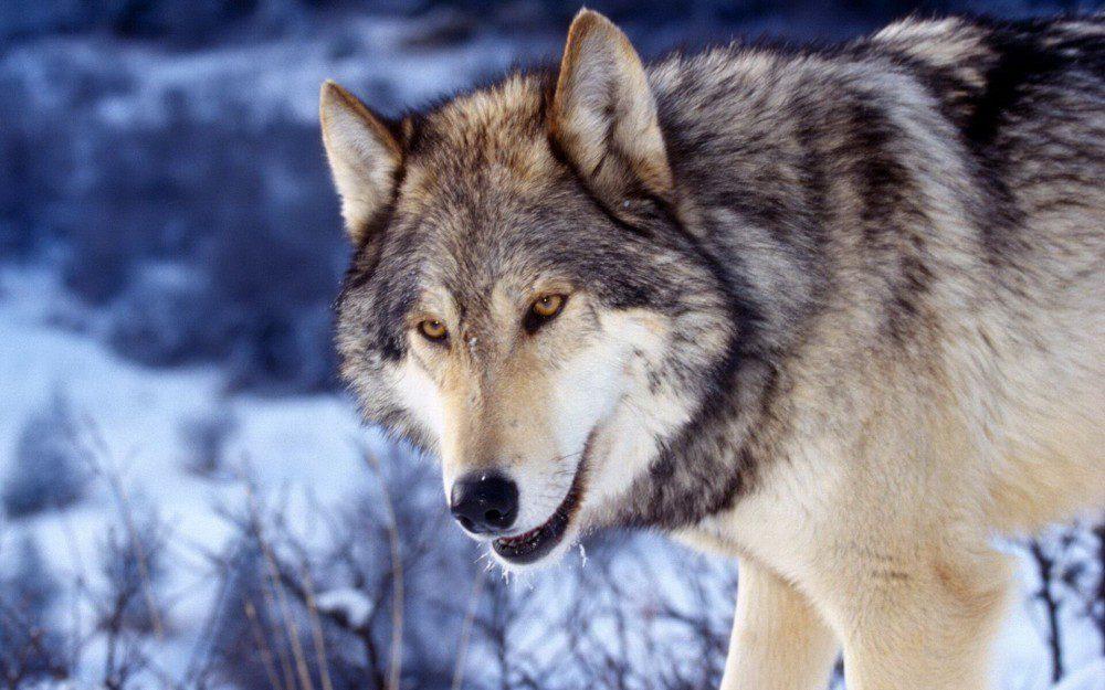 索尼:我是如何被狼性文化搞没落的?